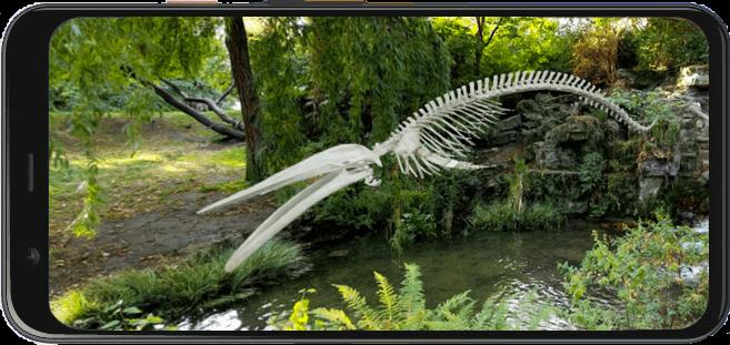 Płetwal błękitny - największe zwierzę, jakie kiedykolwiek żyło na Ziemi
